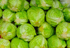 Cabbages background Royalty Free Stock Photo