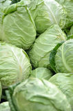Cabbages background Stock Photography