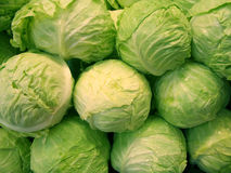 Cabbages and Droplets Royalty Free Stock Image