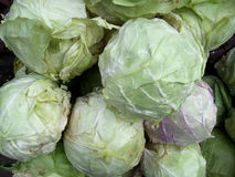 Cabbages Stock Image