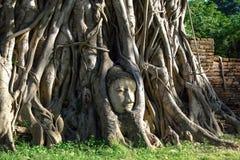 Cabeça antiga do ` s da Buda na raiz da árvore fotos de stock