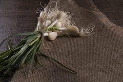 Cabeça branca do alho e de vagens verdes no estilo rústico Fotografia de Stock