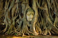 Cabeça c do ` s da Buda imagens de stock