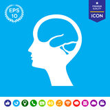 Cabeça com ícone do símbolo do cérebro Imagem de Stock Royalty Free