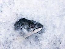 Cabeça crua fresca dos salmões coberta com o gelo frio na opinião superior do mercado fresco do marisco imagens de stock royalty free