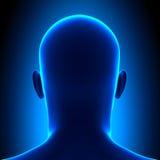 Cabeça da anatomia - vista traseira - conceito azul ilustração stock