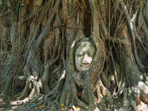 Cabeça da Buda Foto de Stock Royalty Free