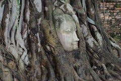 A cabeça da Buda de pedra entrelaçada em raizes da árvore Imagens de Stock