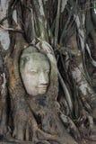 A cabeça da Buda de pedra entrelaçada em raizes da árvore Imagem de Stock Royalty Free