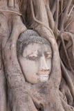 Cabeça da Buda em raizes da árvore Imagem de Stock Royalty Free