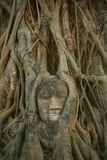 A cabeça da Buda em raizes da árvore Fotografia de Stock