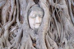 A cabeça da Buda em raizes da árvore, Fotografia de Stock Royalty Free
