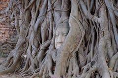 A cabeça da Buda em raizes da árvore, Foto de Stock Royalty Free