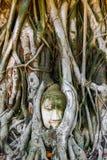 Cabeça da Buda encaixada em uma árvore de Banyan em Ayutthaya, Tailândia fotos de stock royalty free