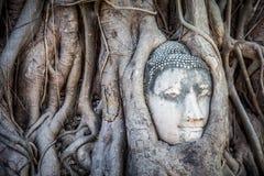 Cabeça da Buda na árvore, Ayutthaya, Tailândia Fotografia de Stock Royalty Free