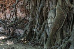 Cabeça da Buda na árvore e no Ayutthaya históricos Fotos de Stock Royalty Free