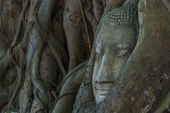 Cabeça da Buda na árvore e no Ayutthaya históricos Foto de Stock