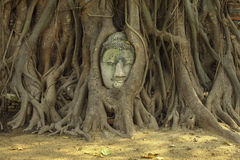 A cabeça da Buda na árvore enraíza em Wat Maha That fotos de stock royalty free