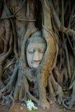 Cabeça da Buda nas árvores Fotos de Stock