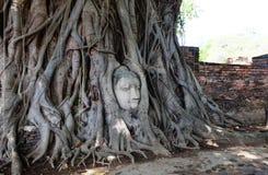 Cabeça da Buda nas raizes Imagem de Stock