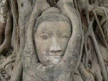 Cabeça da Buda, templo de Wat Maha That, Ayutthaya, Tailândia Imagem de Stock Royalty Free