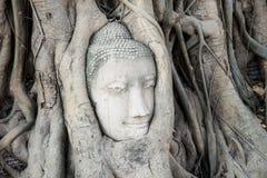 A cabeça da estátua da Buda na árvore enraíza no templo de Wat Mahathat, Fotos de Stock