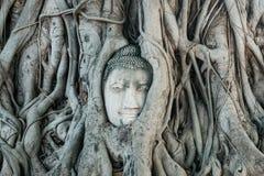 A cabeça da estátua da Buda na árvore enraíza no templo de Wat Mahathat em Ayutthaya Tailândia foto de stock royalty free