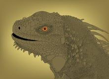Cabeça da iguana Fotos de Stock