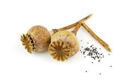 Cabeça da papoila com sementes Imagens de Stock