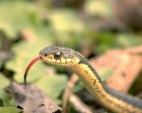 Cabeça da serpente Fotografia de Stock