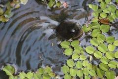 Cabeça da tartaruga Foto de Stock Royalty Free