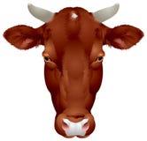 Cabeça da vaca Ilustração Royalty Free