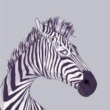 Cabeça da zebra Fotografia de Stock Royalty Free