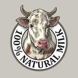 Cabeça das vacas Leite 100 natural Gravura do vetor do vintage Fotografia de Stock Royalty Free