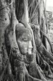 Cabeça de Buddha Imagem de Stock