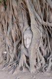 Cabeça de Buddha em raizes da árvore Fotografia de Stock Royalty Free