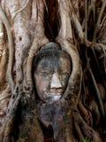 Cabeça de Buddha em raizes da árvore fotos de stock royalty free
