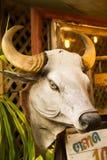 Cabeça de Bull Fotos de Stock