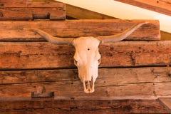 Cabeça de Bull fotos de stock royalty free