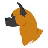 Cabeça de cão akita Imagem de Stock Royalty Free