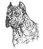 Cabeça de cão na ilustração do desenho da mão do vetor do profil Foto de Stock Royalty Free