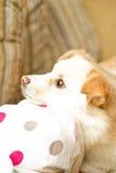 A cabeça de cão no joelho olha acima Foto de Stock Royalty Free