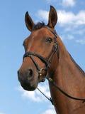 Cabeça de cavalo Foto de Stock Royalty Free