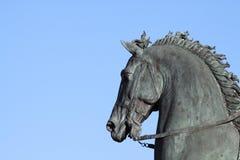 Cabeça de cavalo Fotografia de Stock Royalty Free