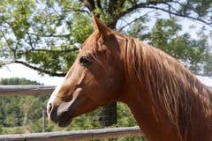 Cabeça de cavalo Fotos de Stock