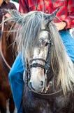 Cabeça de cavalo com cavaleiro Foto de Stock Royalty Free
