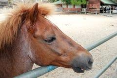 Cabeça de cavalo com uma juba bonita fotografia de stock royalty free