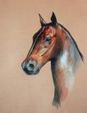 Cabeça de cavalo da baía ilustração stock