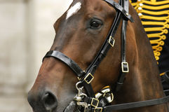 Cabeça de cavalo de Brown Imagens de Stock