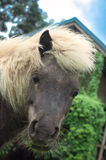 Cabeça de cavalo do close-up que olha fixamente in camera Imagem de Stock Royalty Free